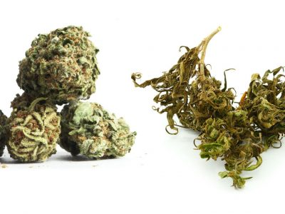 "Understanding The Difference Between ""Dank"" and ""Stank"""