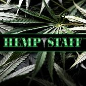 Hemp Farm Cultivation Director