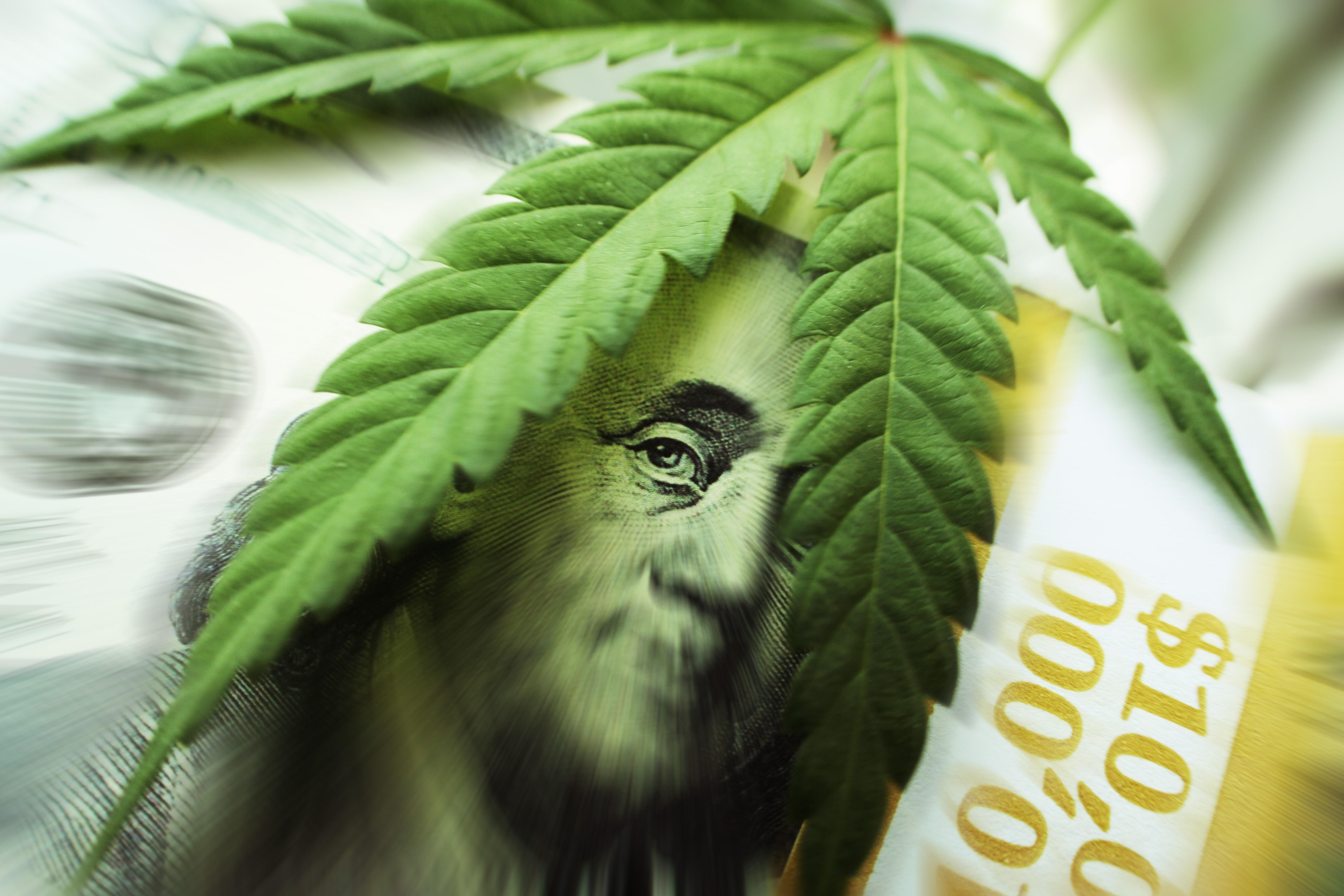 Leaf on Bill