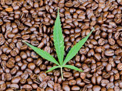Study Shows Caffeine Takes Marijuana to the Next Level