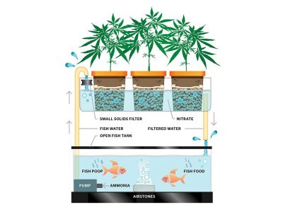 Why Do People Like Aquaponics Weed So Much?