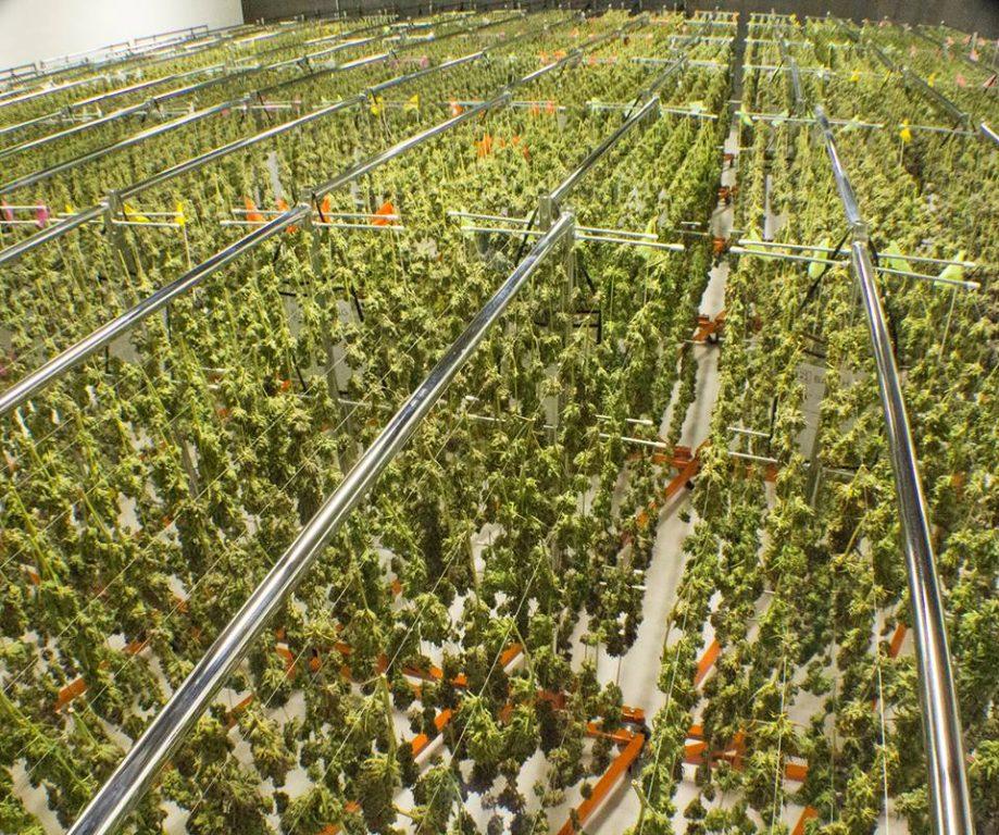 NETA | Marijuana Producers | Franklin, Massachusetts, US