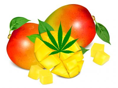 Marijuana & Mangoes
