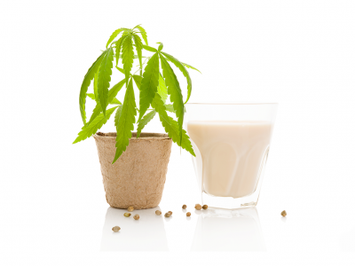 How is Cannabis Milk Being Produced and Used