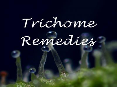 Trichome Remedies