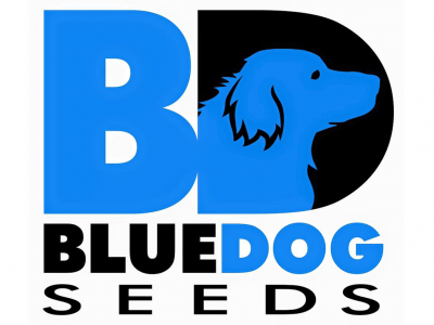 Blue Dog Seeds