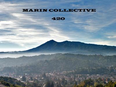 Marin Collective