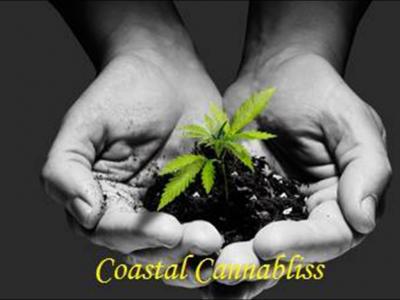 Coastal Cannabliss