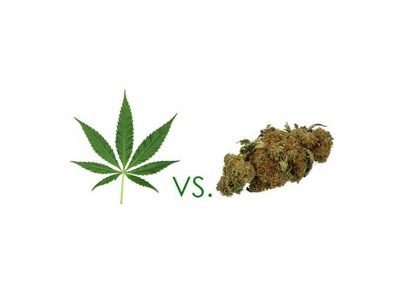 5 Differences Between Marijuana and Hemp