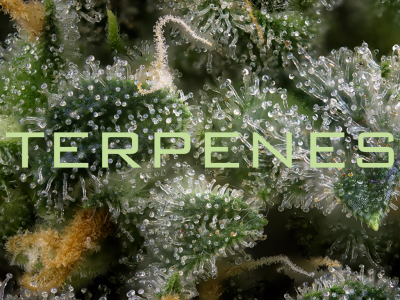 Terpenes and Their Significance