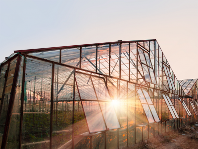 The Benefits of Growing in a Greenhouse