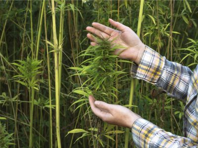 Why Hemp Production is a Win for Us All