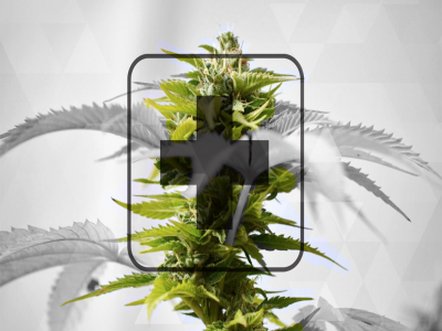 Understanding Cannabis Products