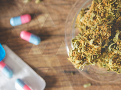 Addressing the Fears About Using Cannabis as Medicine