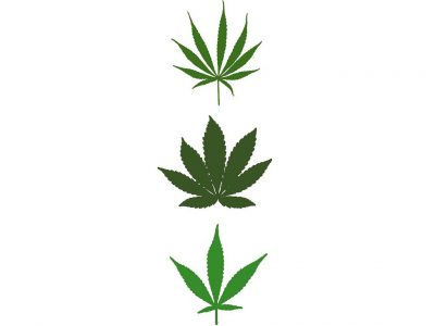 Difference Between Different Marijuana Strains