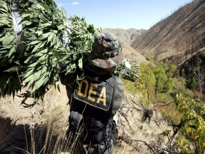 DEA: Marijuana Seizures Fell Nearly 40 Percent In 2017