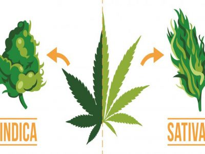 Choose Your Own Adventure: Indica Or Sativa?
