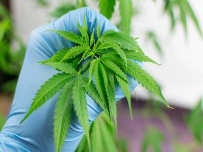 Detroit Proposes Limits on Licensed Marijuana Dispensaries