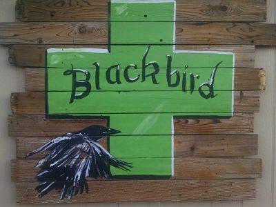 Blackbird Indica