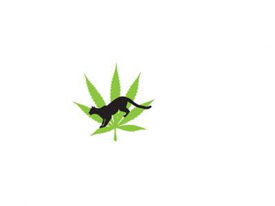 Cougar Cannabis